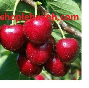Các tác dụng phụ của quả Cherry