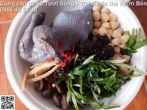 Cung cấp gà ác tươi, gà ác tần thuốc bắc gà Đen Hơ Mông Tại Hà Nội
