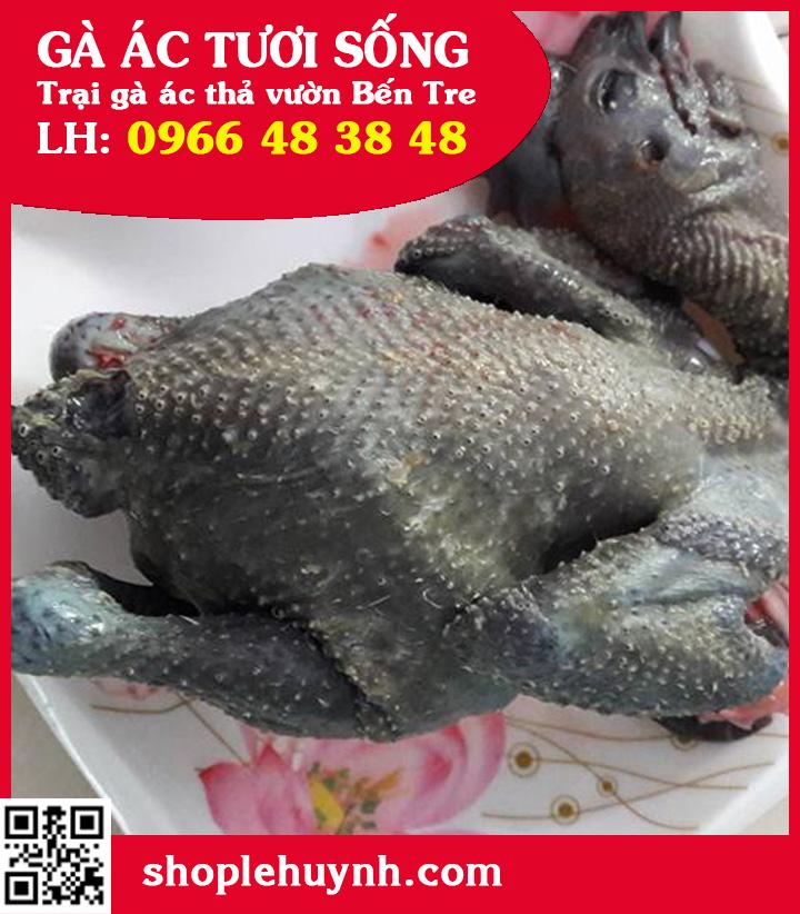 Cung cấp gà ác thịt, gà đen tại Bình Định